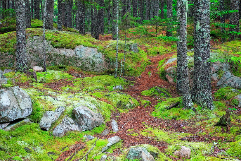 Acadia national park, forest, maine, photo