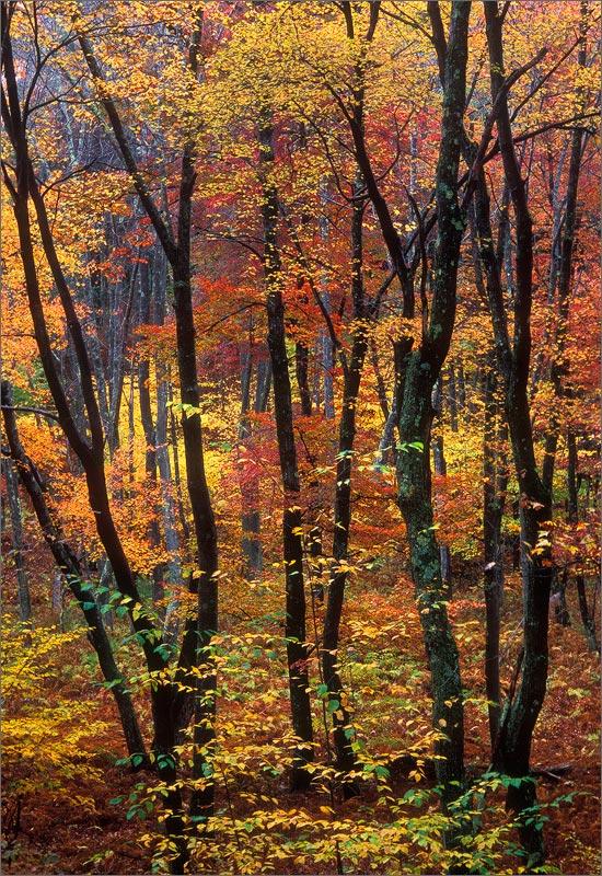 Quabbin reservoir, Massachusetts, autumn, forest,