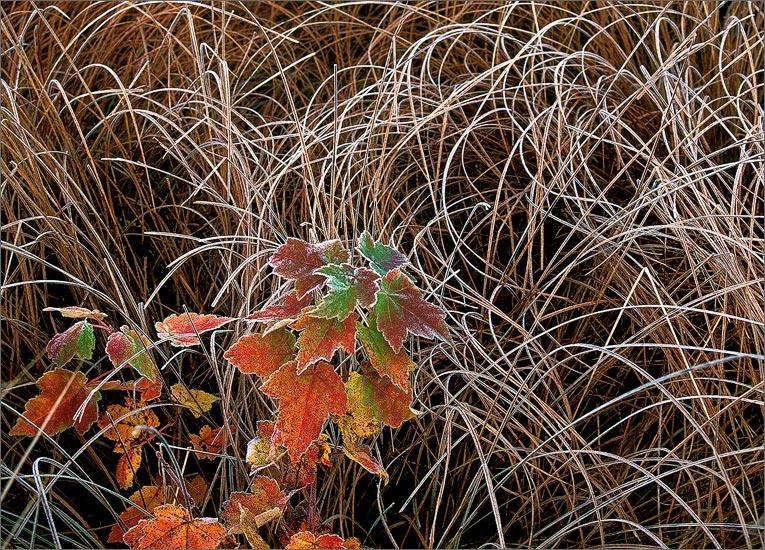 Frost, autumn