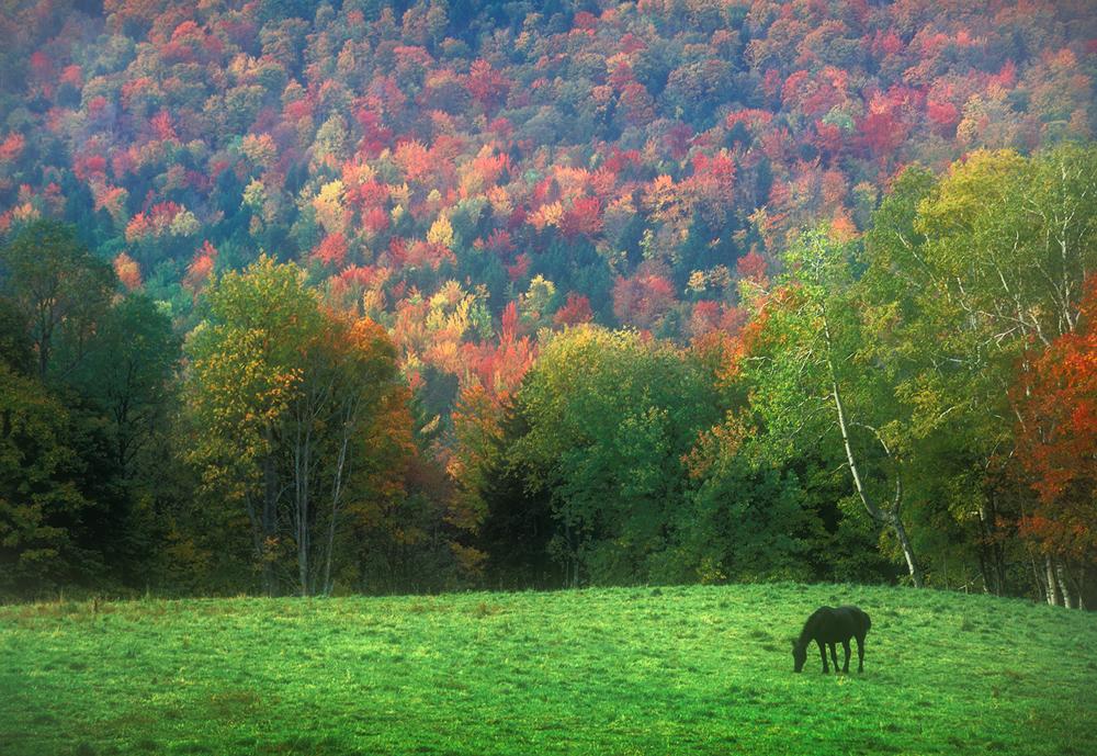 Vermont, horse, autumn foliage, photo