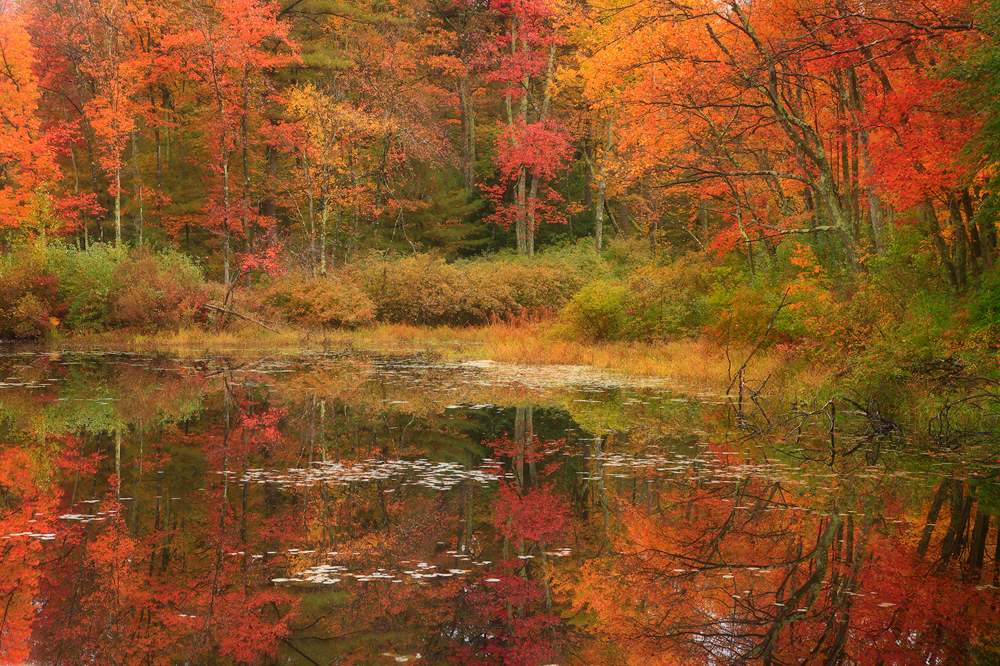 Pelham, Massachusetts, reflection, autumn, pond, photo