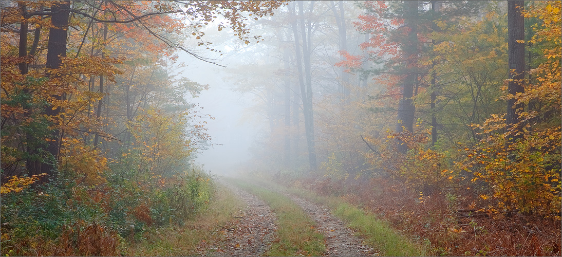 Fog, autumn, trail, quabbin reservoir, Massachusetts,, photo
