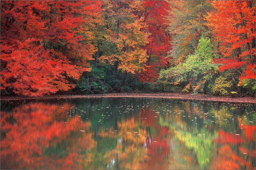 Amherst, autumn, reflection, pond, Massachusetts , photo