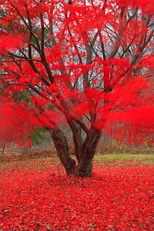 Pelham, autumn, red, tree, Massachusetts , photo