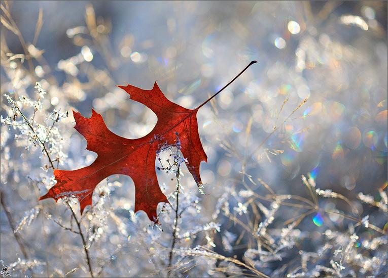 Frost, leaf, winter