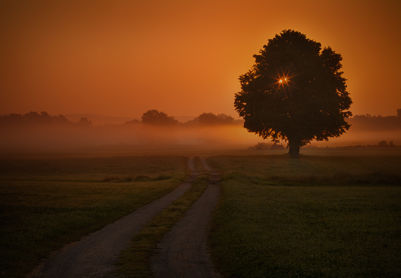 tree, dawn, sunrise, Hadley, Massachusetts, fog, orange, road, photo
