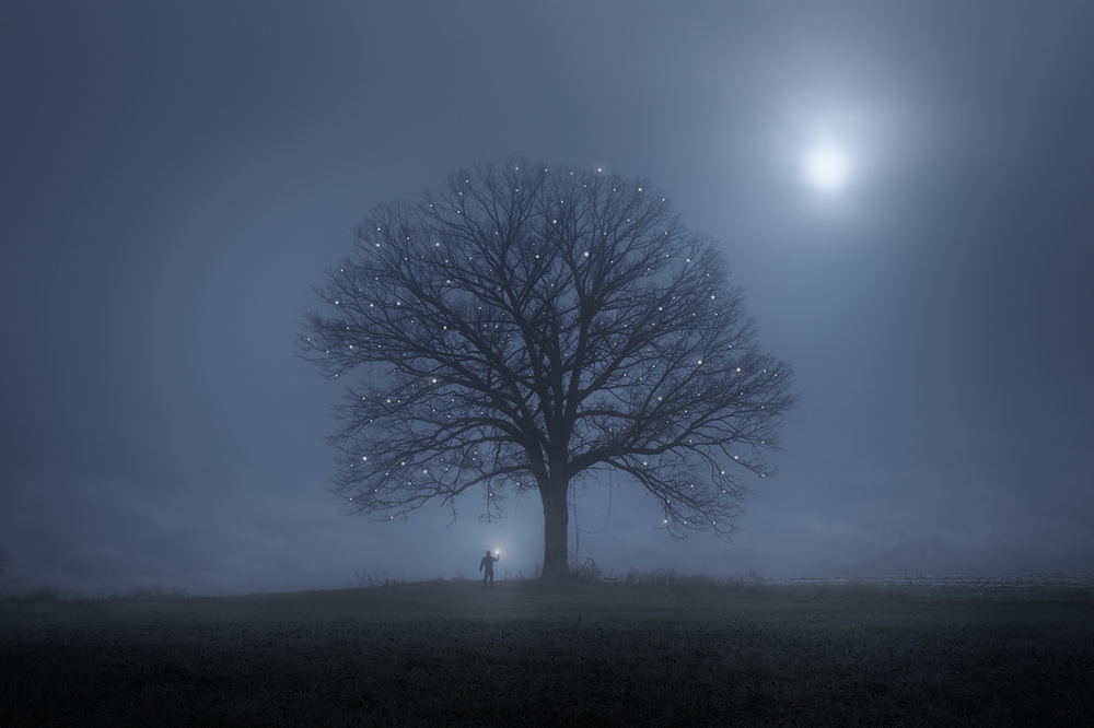 tree, moonrise, hadley, patrick zephyr, night, light, Massachusetts, landscape photography, blue, lone tree
