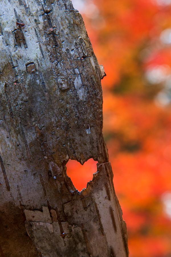 found love, found hearts, valentines day, patrick zephyr, autumn love
