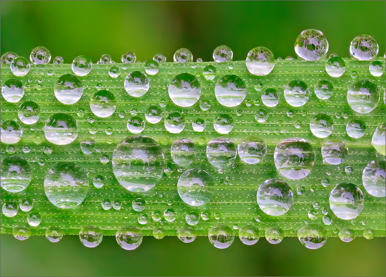 Dew, grass, macro, photo