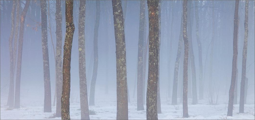 Fog, trees, Amherst, Massachusetts, blue