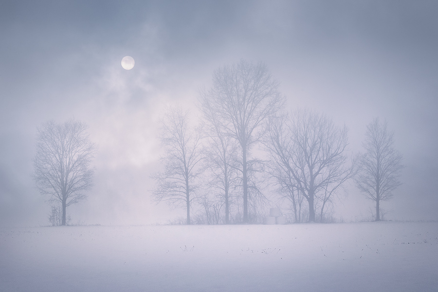 Sometimes thick fog can reveal compositions in familiar places. I've driven by these trees hundreds of times and never felt the...