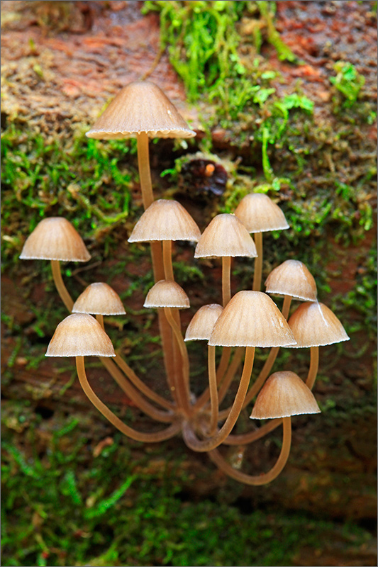 Mushrooms, fungus