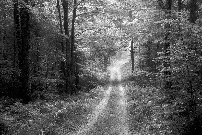 Trail, country road, quabbin reservoir, Massachusetts,, photo