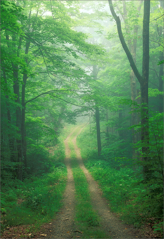 Road, green, quabbin reservoir, Massachusetts, fog