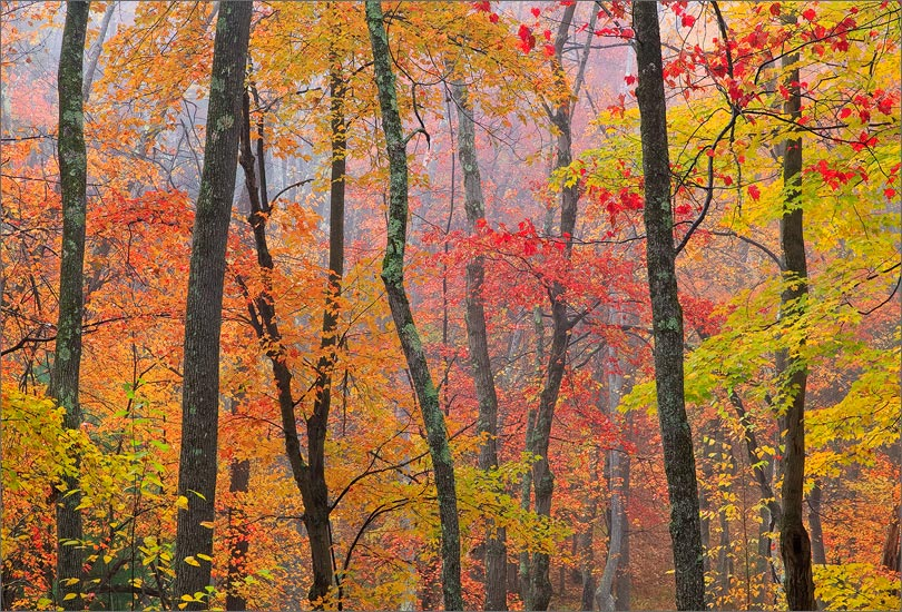 Quabbin reservoir, Massachusetts, autumn, forest, fog, photo