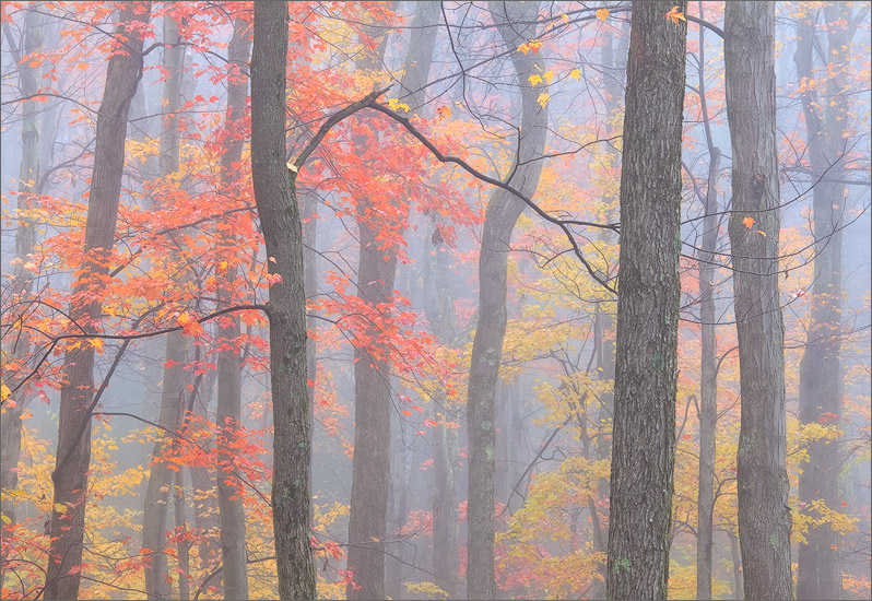 The mysterious pull of autumn fog in the forest is hard to resist. On this particular morning beautiful compositions seemed to...