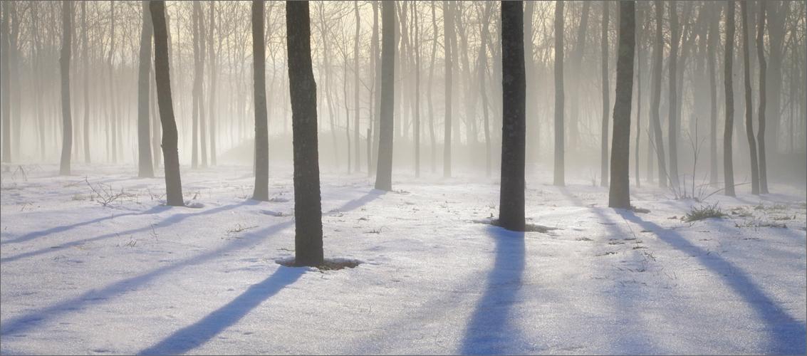 Fog, trees, Amherst, Massachusetts,  shadows