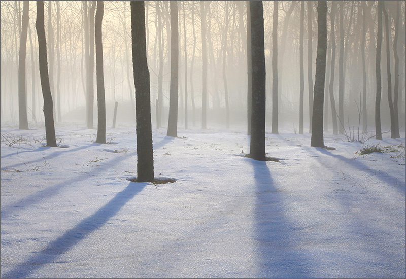 Forest, winter, fog, shadows, Amherst, Massachusetts,