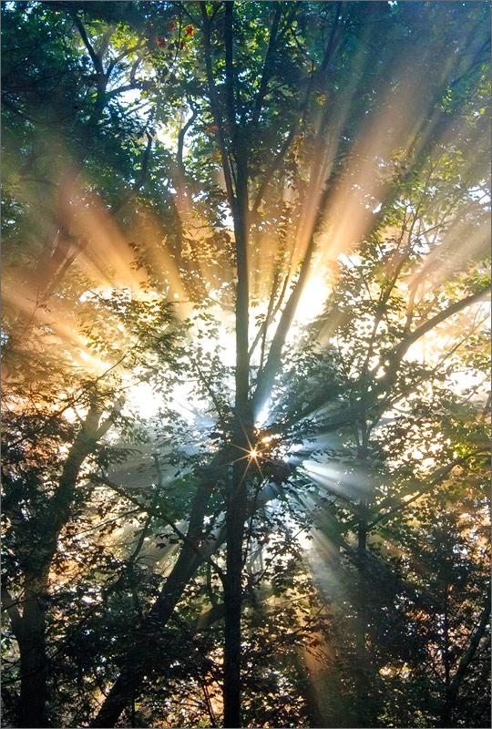 Forest, star, sun rays, quabbin reservoir, Massachusetts , photo