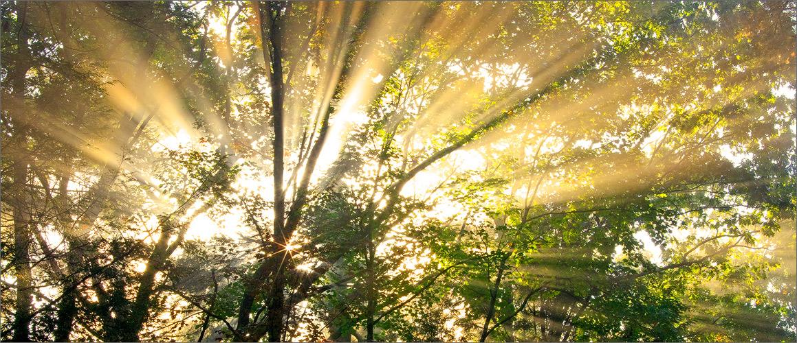 Forest, sun rays, quabbin reservoir, Massachusetts,