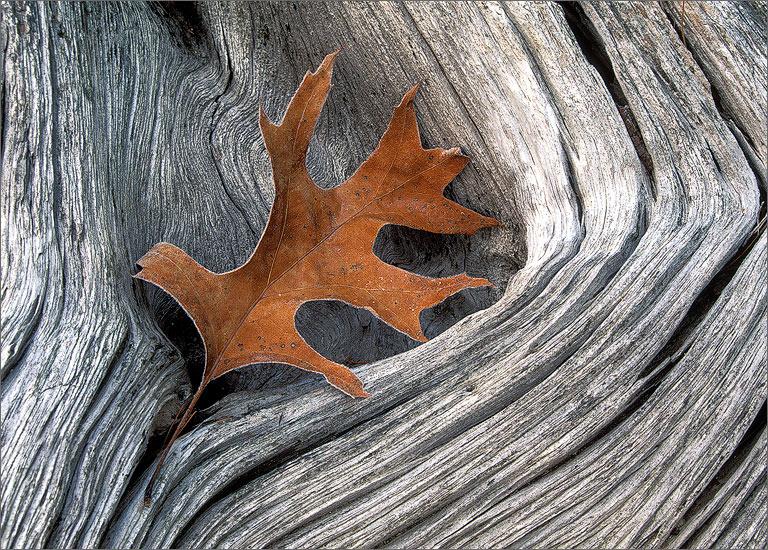 Frost, autumn, drift wood
