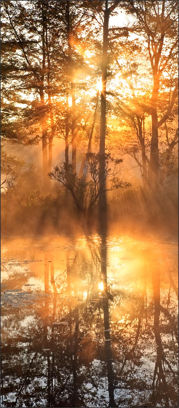 Sunrise, fog, Harvard pond, petersham, Massachusetts, orange, golden, photo