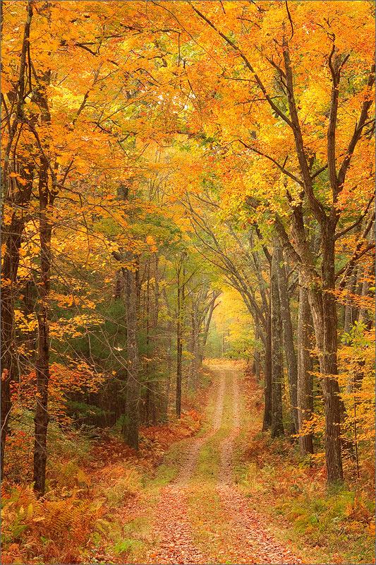 Quabbin reservoir, Massachusetts, gold, autumn, trail, forest