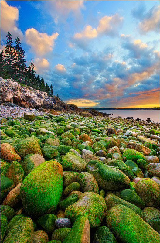 Schoodic peninsula, Acadia national park, Maine, moss, rocks, sunrise, photo