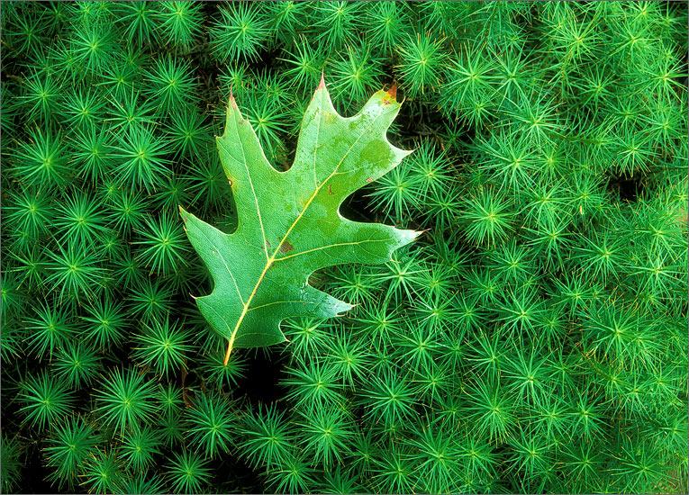 Moss, green, leaf, photo