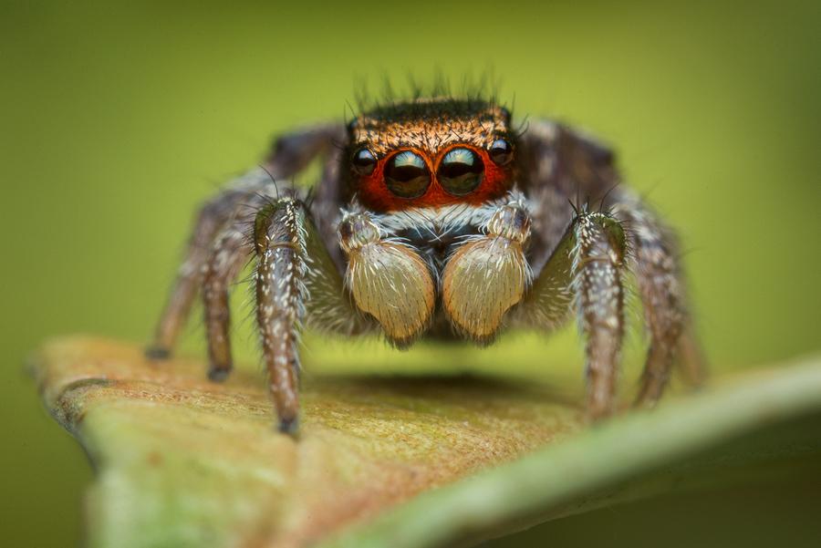 penultimate male