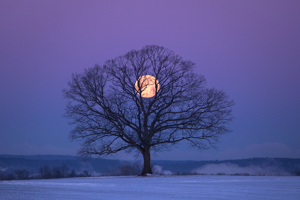 I woke on this morning knowing that full  moon would be setting behind one of my favorite trees but the crazy cold temps outside...