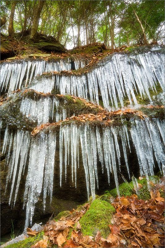 Ice, forest, Pelham, Massachusetts,