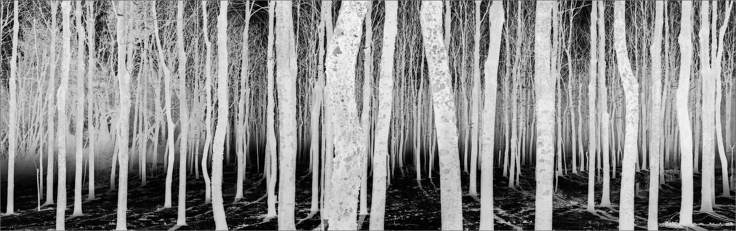 Forest, for, Amherst, Massachusetts,