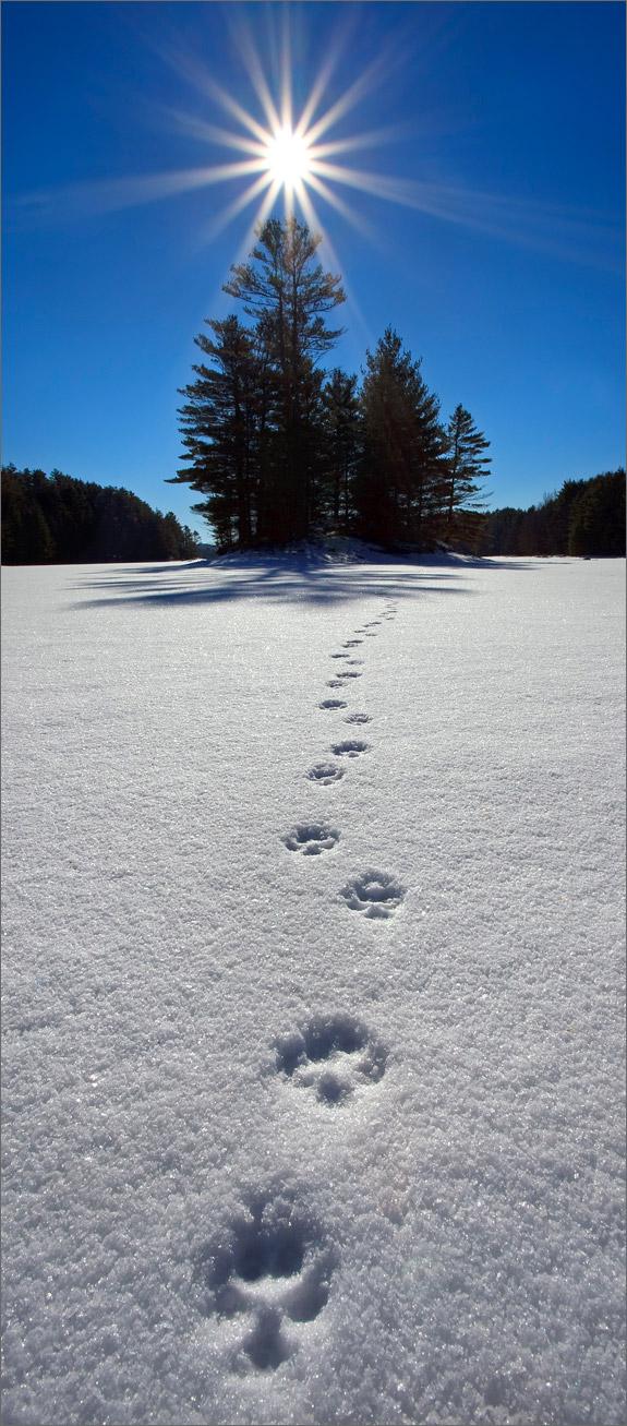 Quabbin reservoir, Massachusetts, snow, tracks, sun star, , photo