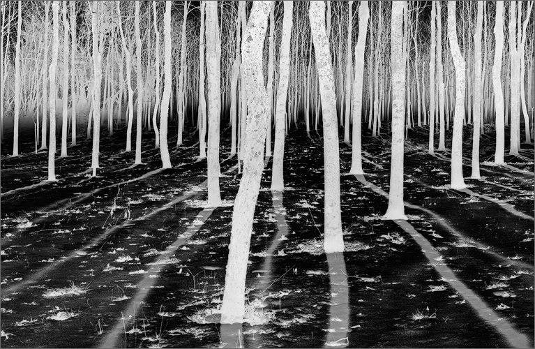 Forest, shadows, fog, Amherst, Massachusetts,