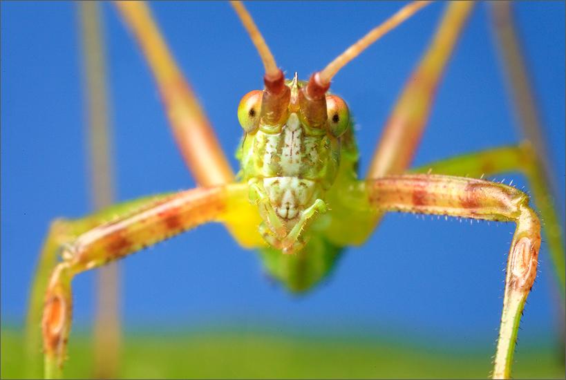 katydid, massachusetts, insect, funny, photo