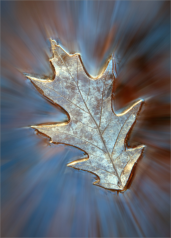 An explanation is needed here. This is not a leaf. It's a print left in the ice on the surface of a pond. I was walking along...
