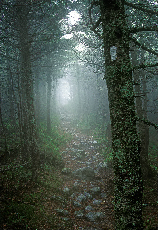 Long trail, Vermont, trail, fog