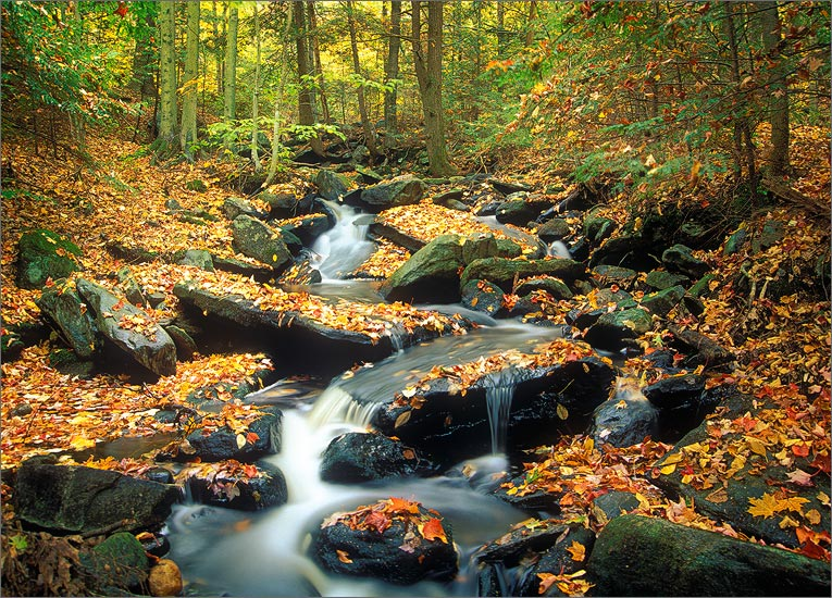 Lyons brook, Wendell, Massachusetts, autumn, cascade, photo