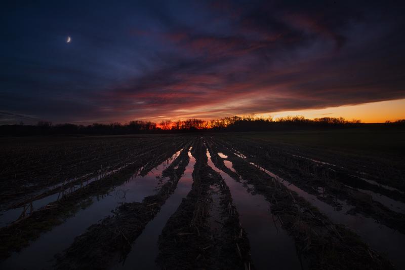 sunset, moon, hadley, Massachusetts, cornfield, dark, dusk, photo
