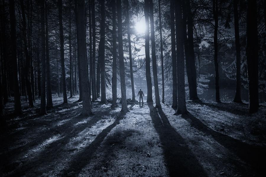 forest, night, moonlight, shadows, amherst, massachusetts, patrick zephyr, photo