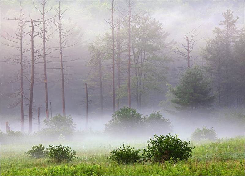 Fog, quabbin reservoir, Massachusetts