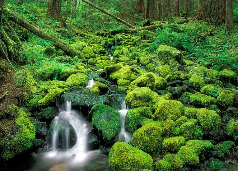 Olympic peninsula, Washington, moss, cascade, photo