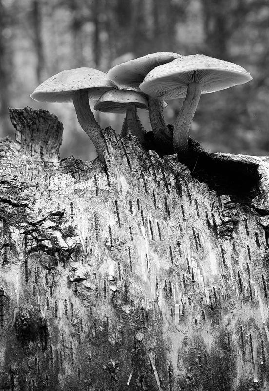 Mushrooms, Pelham, Massachusetts,