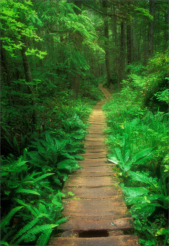 Olympic peninsula, trail, Washington,