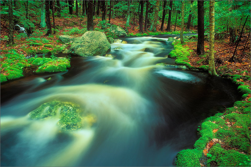 Osgood brook, Wendell, Massachusetts, moss, stream,, photo