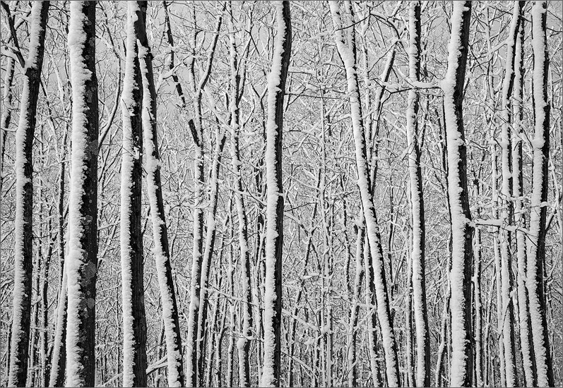 Winter, forest, snow, quabbin reservoir, Massachusetts,