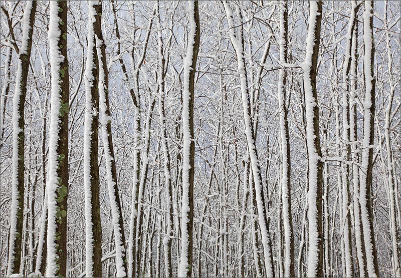 Snow, trees, winter, white, new Salem, Massachusetts , photo