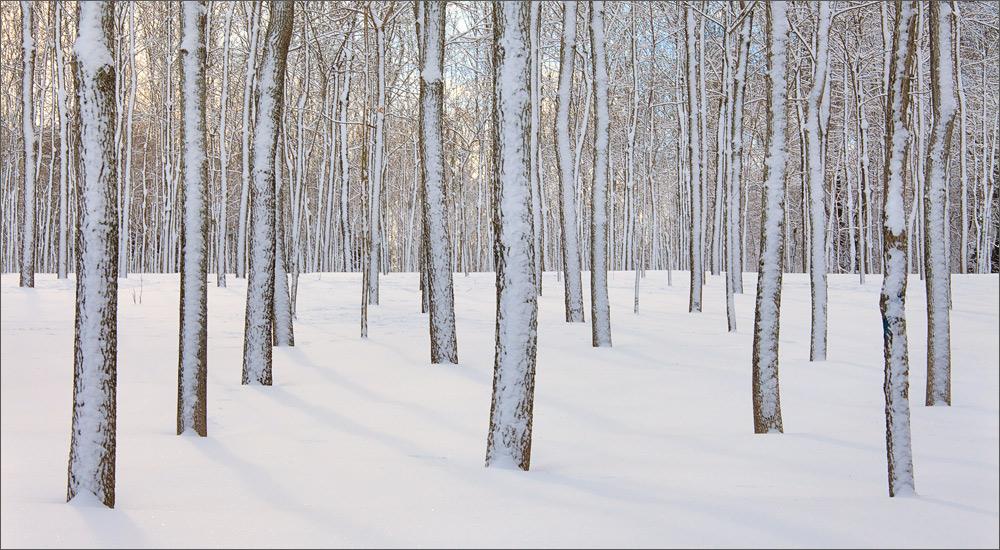 winter, snow, trees, amherst, massachusetts, , photo
