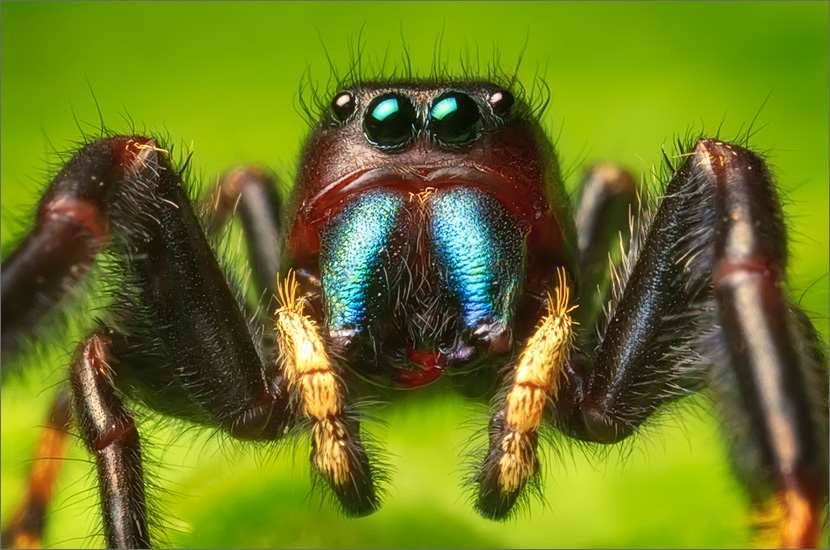 If I was the size of an ant, this is one creature I would never want to meet! A face only a mother could love:-)